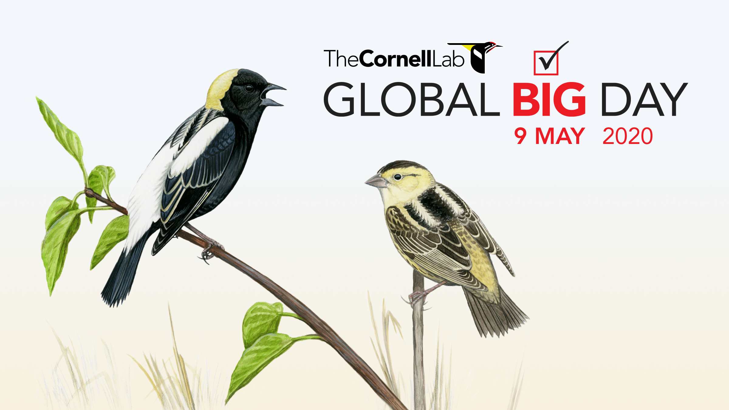 Global Big Day—9 May 2020 - Ebird